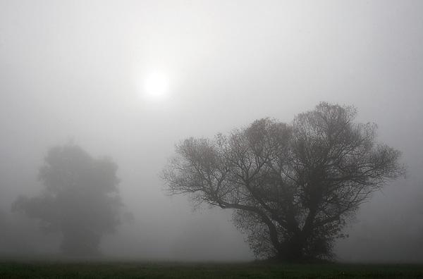 Krivánszky Árpád - Fák ködben