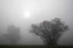 Krivánszky Árpad - Fák ködben