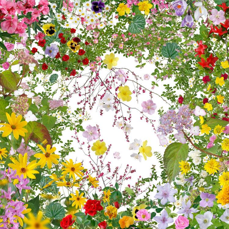 Katsuhiro Noguchi: Flowers of Fukushima